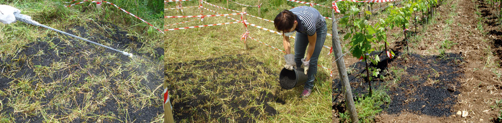 Spandimento biochar foraggio